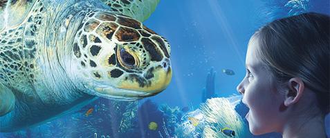 Zeehonden-sea-life